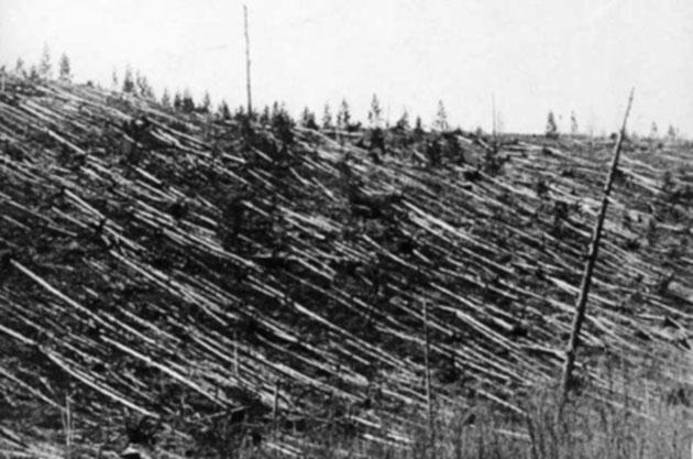035-unzaehlige-umgestuertzte-baeume-1908-in-tunguska
