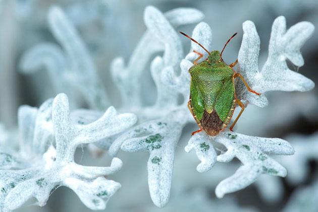 -76 Prozent: Dramatischer Insektenschwund in Deutschland