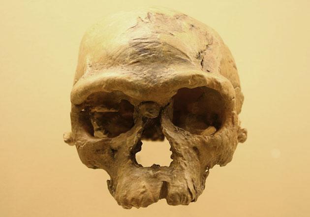 Gen-Studie zeigt: Homo sapiens ist rund 170.000 Jahre älter als gedacht