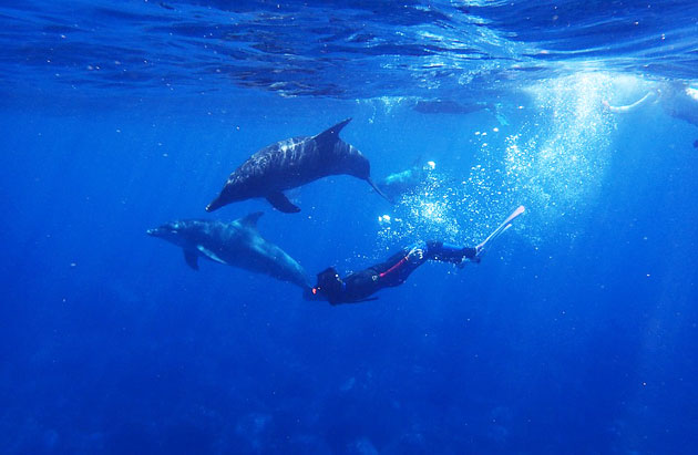 Symbolbild: Tauchen mit Delfinen. Copyright: Gemeinfrei