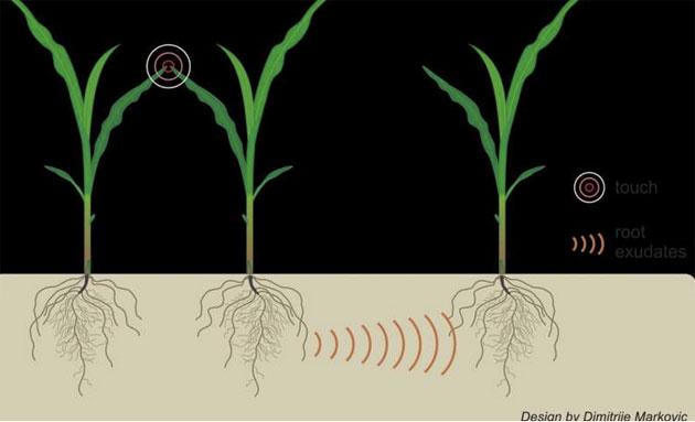 Pflanzenkommunikation