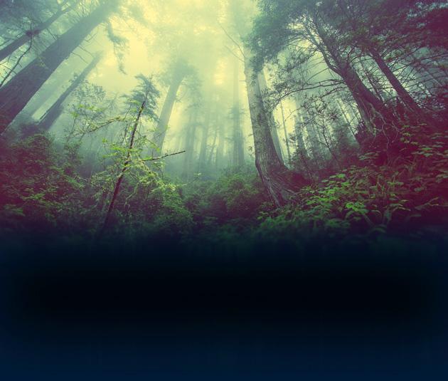 Forschungsgruppe sucht nach Leben unter dem Waldboden