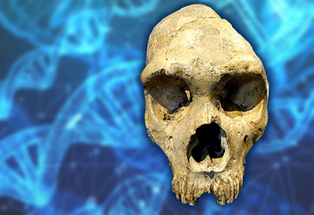 Künstliche Intelligenz bestätigt unbekannten menschlichen Vorfahren