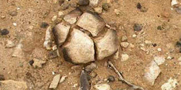 Einer der von Feuer geschwärzten Steine an der Moyjil Site im australischen South-West Victoria.Copyright: Bowler et al., Scientific Report 2019