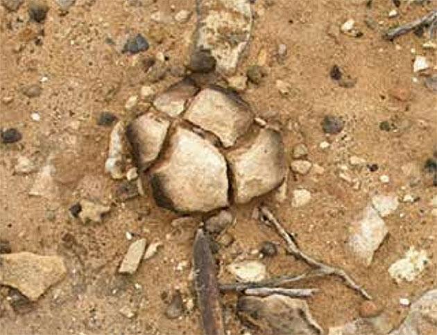 Neue Funde legen nahe: Schon vor 120.000 Jahren lebten Menschen in Australien