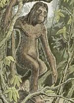 Künstlerische Darstellung des Orang-Pendek basierend auf Zeugenaussagen. Copyright/Quelle: CFZ.org.uk