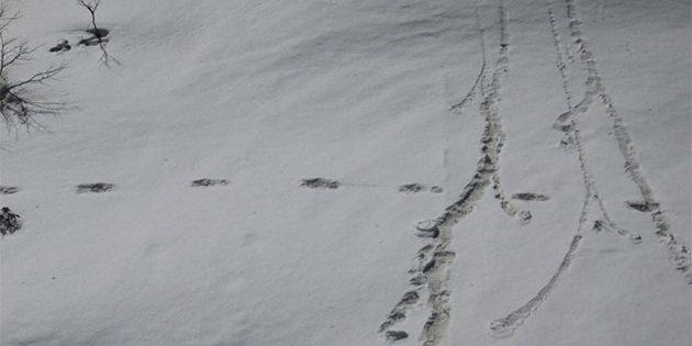 Stammen diese Spuren im Schnee des Makalu-Barun Nationalparks von einem Yeti? Wohl eher nicht. Copyright: ADG PI - INDIAN ARMY