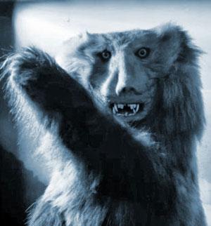 """""""Grusel-Präparat"""" eines """"Yeti-Bären"""" aus den 1930er Jahren im Rheinhold Messner Museum."""