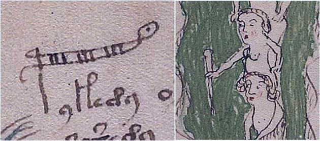 """Hier wird das Wort """"Palina"""" dargestellt, eine Rute zum Messen der Wassertiefe, manchmal auch als Stadienrute oder Lineal bezeichnet. Der Buchstabe 'p' wurde erweitert. Copyright/Quelle: Voynich Manuskript / G. Cheshire"""