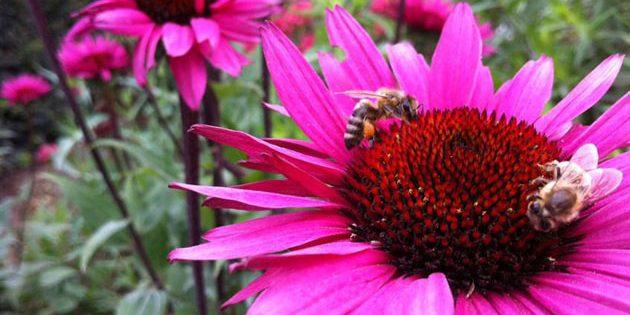 Symbolbild: Bienen. Copyright: A. Müller für grenzwissenschaft-aktuell.de