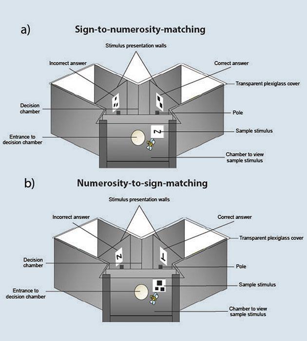 Schematischer Aufbau der beiden Experimente. Copyright: RMIT University