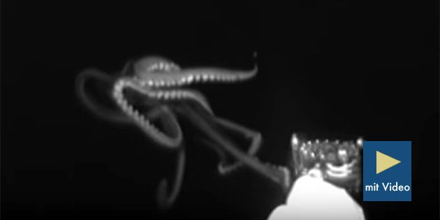 Standbild aus dem Video. Copyright: NOAA