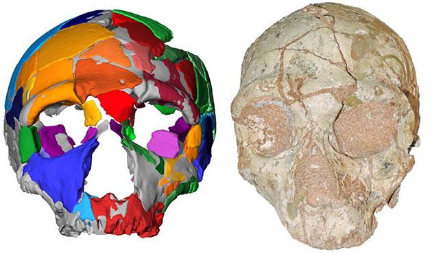"""Der """"Apidima 2""""-Schädel (rechts) und seine Rekonstruktion (links). Apidima 2 zeigt für Neandertaler charakteristische Merkmale. Copyright: Katerina Harvati, Universität Tübingen"""
