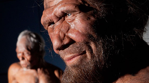 Neandertaler-Rekonstruktion. Copyright: Britain One Million Years of the Human Story
