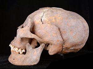 Der auf ein Alter von 12.000 Jahren datierte Langschädel eines Manne von der Fundstelle Houtaomuga. Copyright/Quelle: Q. Wang et al. / Journal of Physical Anthropolgy, 2019