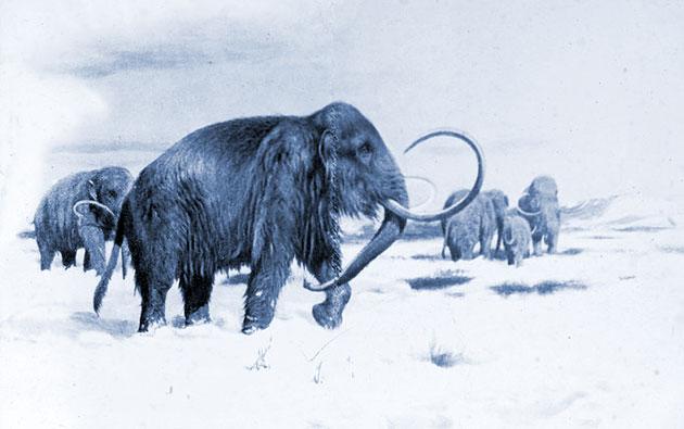 Studie: Mammuts haben bis vor 4.000 Jahre überlebt