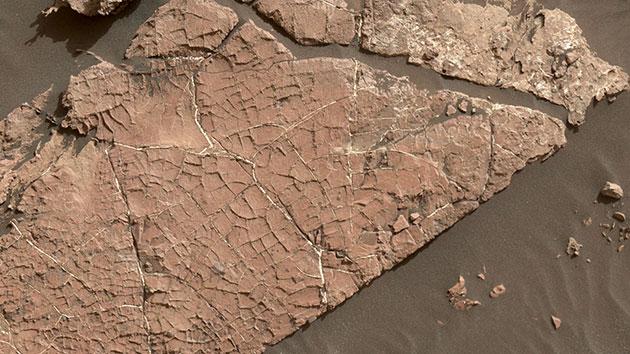 Mögliche Schlammrisse im Marsfelsen Copyright: NASA / JPL-Caltech / MSSS
