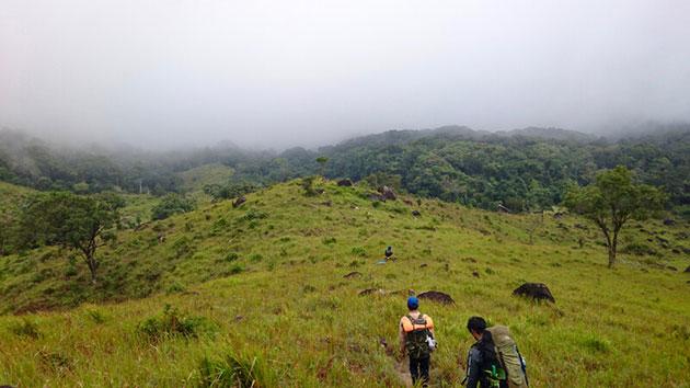 Blick auf die Küstenregenwälder Vietnams, der Heimat der nun dokumentierten Vietnam-Kantschile. Copyright/Quelle: An Nguyen