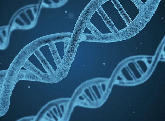 Symbolbild: DNA Copyright: qimono (via Pixabay.com) / Pixabay License
