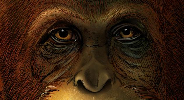 Künstlerische Gesichtsrekonstruktion eines Gigantopithecus blacki, basierend auf der Verandtschaft zu heute lebenden Orang-Utans (Illu.). Copyright: Ikumi Kayama (Studio Kayama LLC)