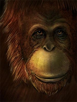Künstlerische Darstellung von Gigantopithecus blacki. Copyright: Ikumi Kayama (Studio Kayama LLC)