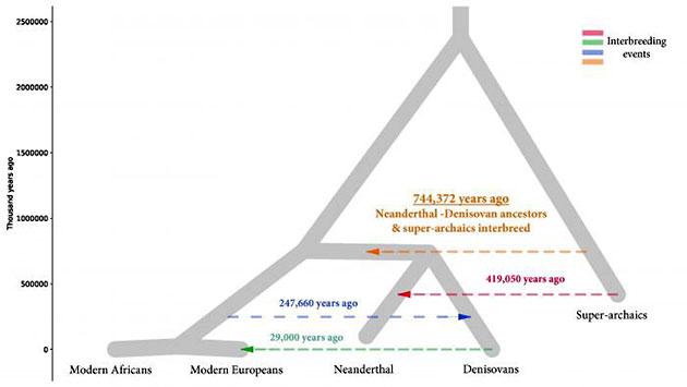 Stammbaumdiagramm des Menschen zeigt die Kreuzungen zwischen verschiedenen Arten. Quelle: Rogers et al. / Science Advances