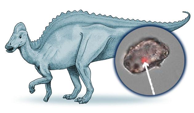 Künstlerische Darstellung eines Entenschnabelsauriers (Hypacrosaurus). Copyright: Debivort (via WikimediaCommons) / CC BY-SA 3.0