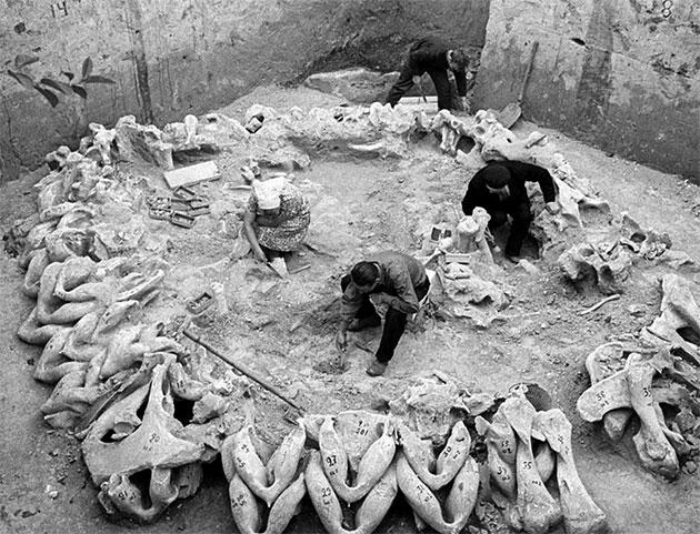 Frühere Ausgrabungen eines weiteren, kleineren Knochenkreises. Copyright: unbek.