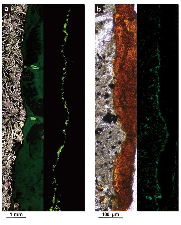 Aerobe Bakterien leben dicht gepackt in Tunneln aus Tonmineralien, die in dieser Probe aus festem Gestein aus 122 Metern Tiefe unter dem Meeresboden gefunden wurden. Bild B ist 1000-mal größer als Bild A. Das Foto auf der linken Seite in jedem Bild wurde mit normalem Licht und das Foto auf der rechten Seite mit fluoreszierendem Licht aufgenommen. Das feste Basaltgestein ist grau, die Tonmineralien sind orange und die Bakterienzellen sind grüne Kugeln. Copyright: Suzuki et al. 2020, DOI: 10.1038 / s42003-020-0860-1, CC BY 4.0