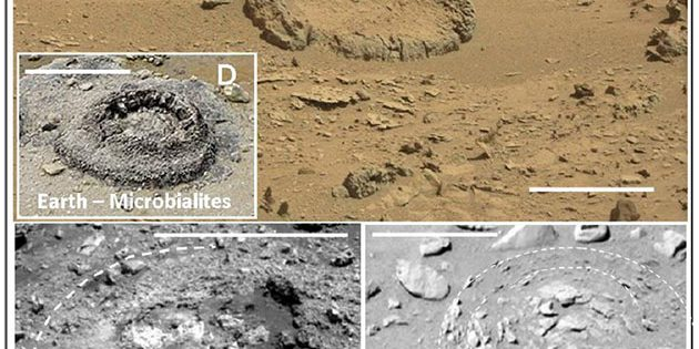 Rover-Aufnahmen runder abgeflachter Aufbrüche auf dem Mars (A-C) und zum Vergleich eine bekannte erodierte mikrobialithische Struktur (D) am westaustralischen Lake Thetis. Die Maßbalken entsprechen jeweils 0,5 Metern. Quelle/Copyright: V. Rizzo, International Journal of Astrobiology, 2020 / NASA / Hntgr. (D) by Bahnfrend (via WikimediaCommons)