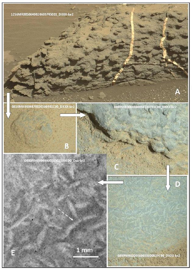 Auf diesen Curiosity-Aufnahmen vom 1256 Missionstag (sol) zeichnen sich auf der Gesteinsoberfläche kleine Strukturen ab, deren Körper gebogen sind, spitz zulaufen und stark an irdische biogene Strukturen erinnern (B und C; Vergrößerungen: D, E). Quelle/Copyright: V. Rizzo, International Journal of Astrobiology, 2020 / NASA