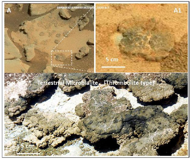 Auf Aufnahmen eines Aufbruches, den der Curiosity-Rover am Missionstag 890 untersuchte, zeigen sich kleine Strukturen (A, A1), deren Merkmale gleich vielfach irdischen Thromboliten (B) gleichen. Quelle/Copyright: V. Rizzo, International Journal of Astrobiology, 2020 / NASA