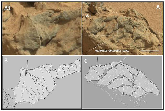 """Konische Strukturen, die vom Mars-Rover """"Curiosity"""" an einem Tongesteinsaufbruch am Missionstag """"sol 78"""" entdeckt und fotografiert wurden. Der Maßbalken entspricht 5 Zentimetern. Quelle/Copyright: V. Rizzo, International Journal of Astrobiology, 2020 / NASA"""