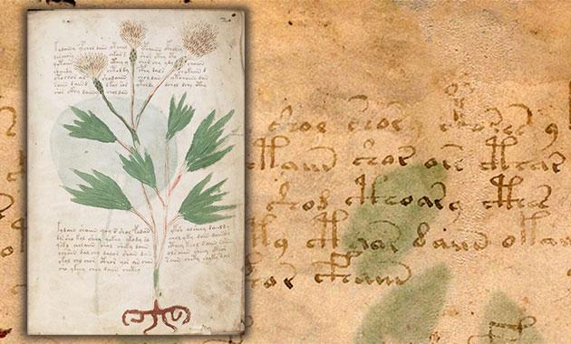 Seiten- und Schriftbeispiele aus dem Voynich-Manuskript. Copyright: Yale University, Beinecke Rare Book and Manuscript Library