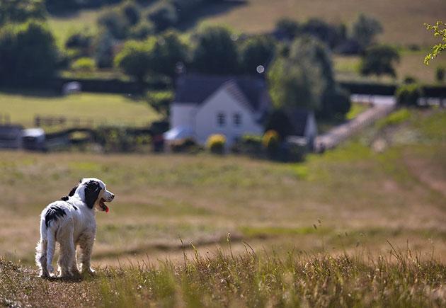 Symbolbild: Hund Copyright: DaveFrancis (via Pixabay.com) / Pixabay License