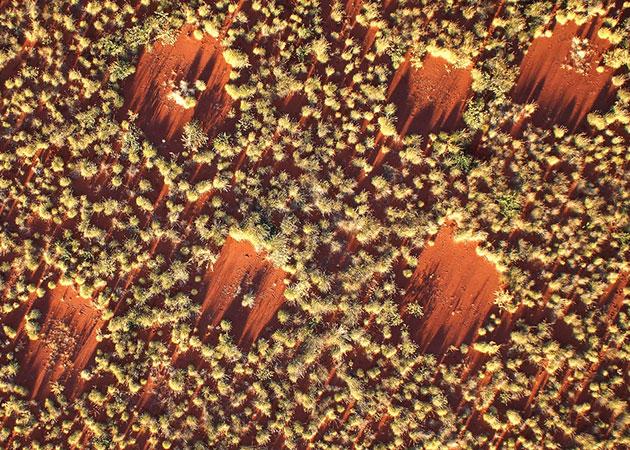 """Luftbild australischer """"Feenkreise"""" mit jeweils rund 4 Metern Durchmesser und gleichmäßigen Abständen der Kreiszentren zueinander. Copyright: Stephan Getzin"""