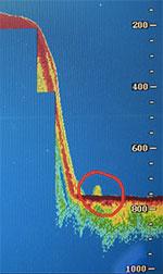 Rod Michies Sonaraufnahme zeigt einen großen Kontakt am Grunde des Loch Ness vor Urquhart Bay im Juni 2015. (Klicken Sie auf die Bildmitte, um zu einer vergrößerten Darstellung zu gelangen.) Copyright/Quelle: Michie/Northpix/The Scottisch Sun