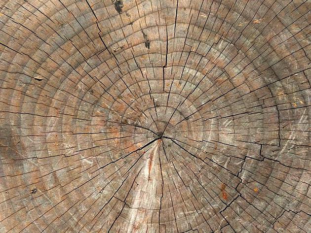 Baumringe. Copyright: Pixabay License