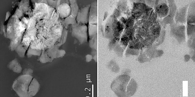 Ein einzigartiger Prototyp von mikrobiellem Leben, gezüchtet auf echtem Marsgestein: Das Bild, aufgenommen mit einem Transmissionselektronenmikroskops, zeigt das inhomogene, robuste und grobkörnige Innere von M. sedula, das mit kristallinen Ablagerungen gefüllt ist. Copyright/Quelle: Tetyana Milojevic / Universität Wien