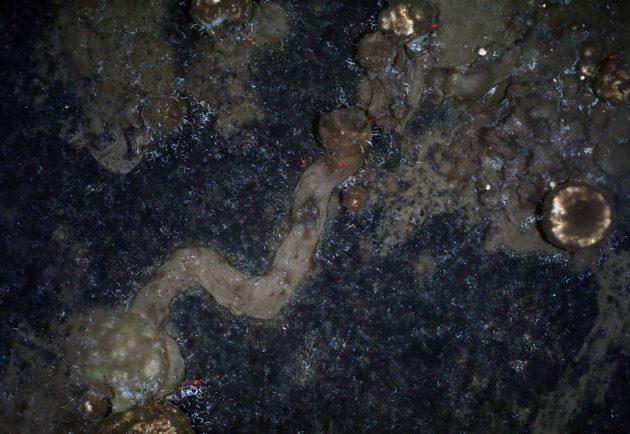 Schwämme hinterlassen Spuren am Meeresboden der Tiefsee. Bisher ging die Wissenschaft davon aus, dass die Tiere festsitzen. Copyright: AWI OFOBS team PS101)