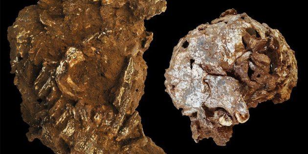 Außenansicht des geborgenen Hauptblocks mit dem auseinandergebrochenen Teilskelett (l.) und Außenansicht der linken Seite von Mtotos Schädel und Unterkiefer (r.). Copyright: Martinón-Torres, et al., 2021