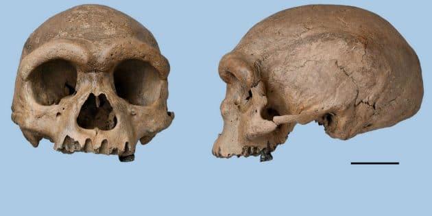 """Der Harbin-Schädel eines """"Homo longi"""" (Drachenmensch). Copyright: Xijun Ni"""