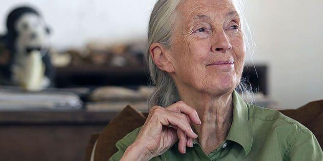 Dr. Jane Goodall im Gombe Nationalpark Copyright: Simon Fraser University (via WikimediaCommons) / CC BY-SA 2.0